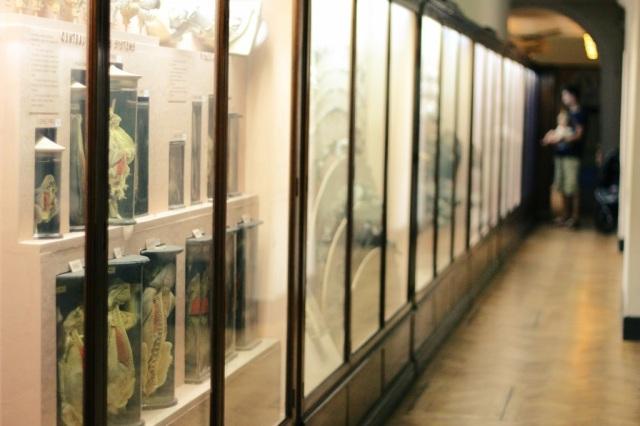 horniman museum london